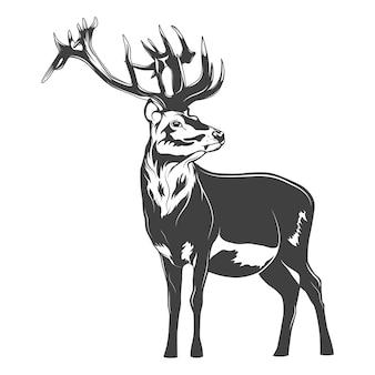 白で分離されたモノクロの鹿