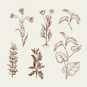 Monochrome drawing with herbs and wild flowers