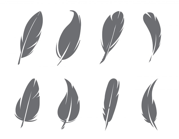 Monochrome feathers isolate