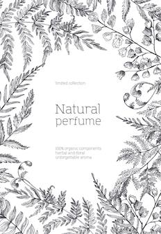 Монохромный шаблон флаера, украшенный рисованной лесными папоротниками и травами