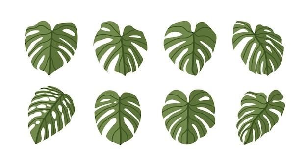 モンステラデリシオサ植物の葉フラットスタイル分離
