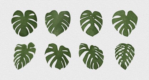 分離されたモンステラデリシオサ植物の葉の水彩画スタイル