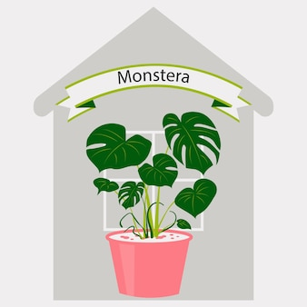 家の背景に植木鉢のモンステラ家やオフィスの室内装飾のための屋内植物