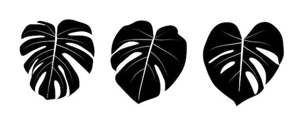 白に分離されたモンステラの葉