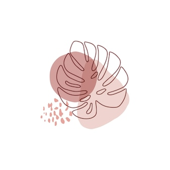 白で隔離されるモンステラの葉