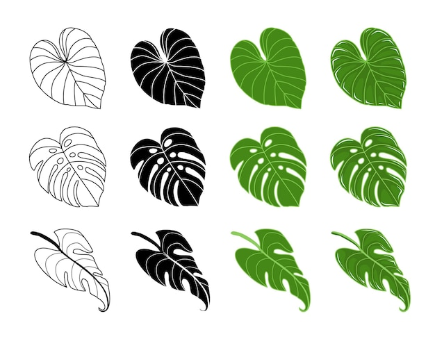 Monstera 잎 philodendron 벡터
