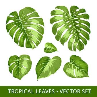 Monstera leaf tropical elements set.