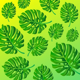 Monstera leaves abstract gradient background.