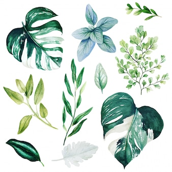 Monstera leaves and adiantum, watercolor bright greenery