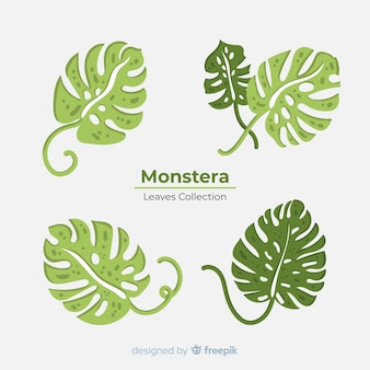 Monstera leaves collection