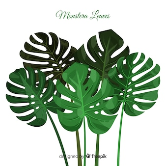 Monstera leaves group background