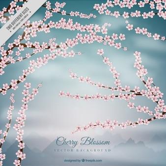 Montainous背景に桜の木