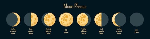 Moon phases infographics.