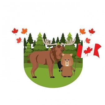 カナダのムースとビーバー動物