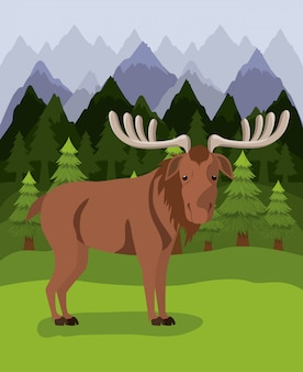 Moose animal and pine trees