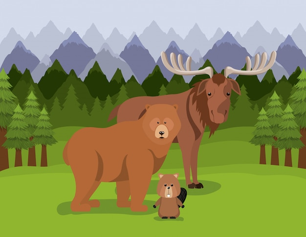 Moose bear and beaver animal