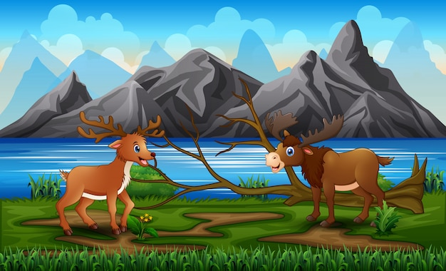 A moose and deer playing in the park