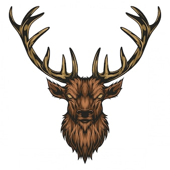 Moose head illustration