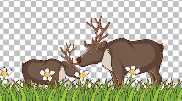 透明な背景の芝生のフィールドに立っているムース