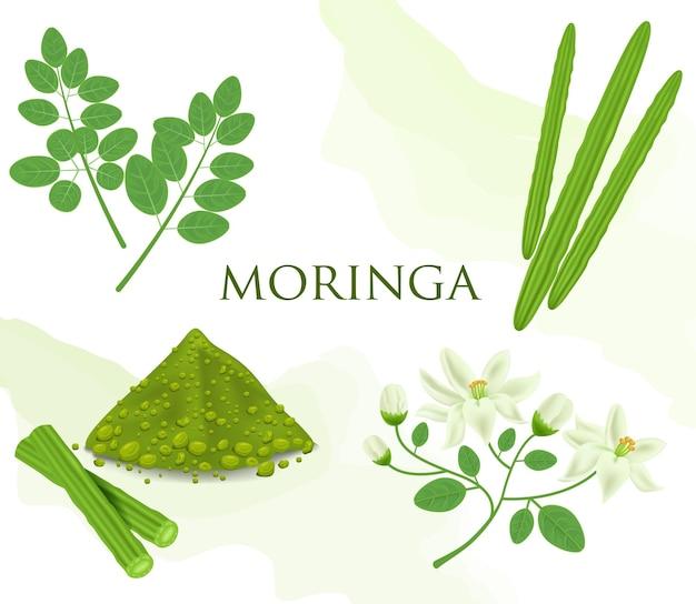 モリンガは食用の緑の植物です