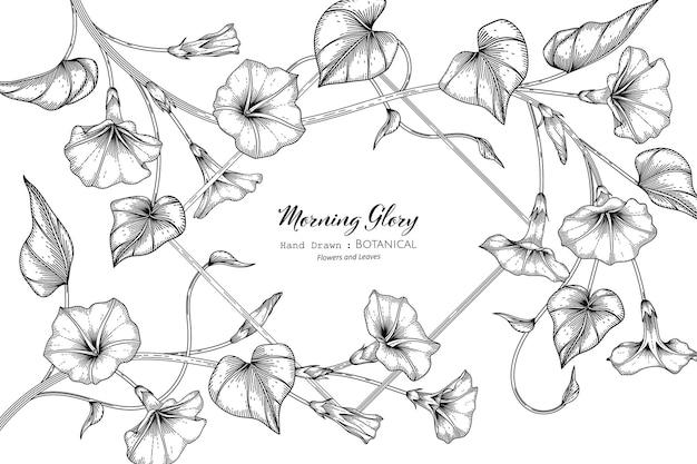Ипомея цветок и лист рисованной ботанические иллюстрации с линией искусства.