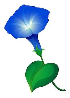 Fiore di gloria mattutina in colore blu