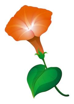 Morning glory flower in orange color