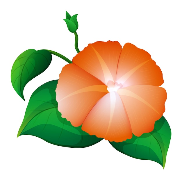 Fiore di gloria mattutina in colore arancione