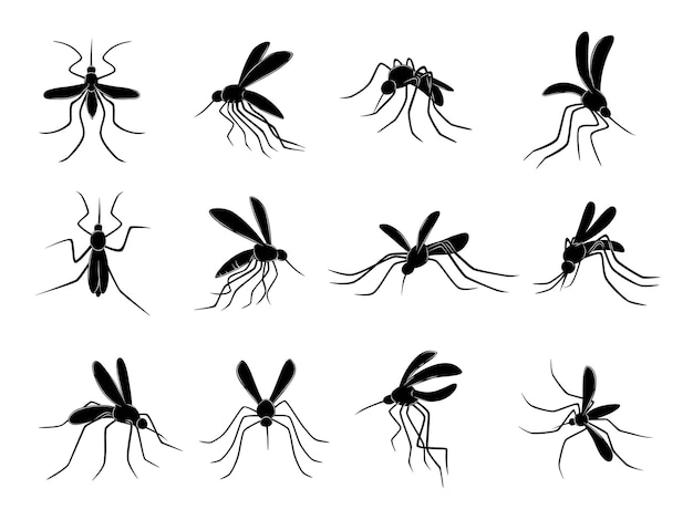 Mosquito. flying insects carriers of viruses bloodsuckers vector drawn mosquitos