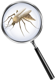 Mosquito through magnifying glass