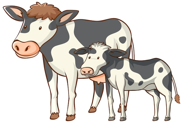 Mother and baby cow animal cartoon on white background