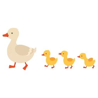 母鴨とアヒルの子。並んで歩いているかわいいアヒルの赤ちゃん。