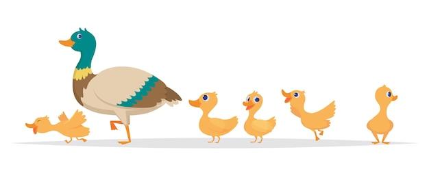 母鴨。野生のアヒルの鳥家族ウォーキングベクトル漫画コレクションの行。アヒルの母、野生のアヒルの子のイラスト