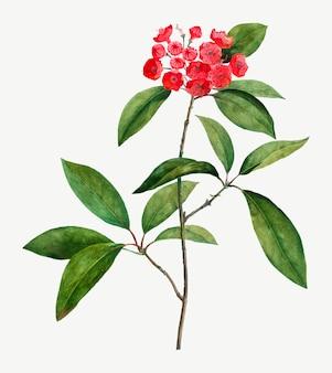 Mountain laurel branch