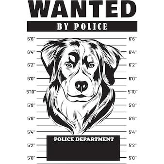 Mugshot of bernese mountain dog holding banner behind bars
