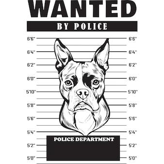 Mugshot of boston terrier dog holding banner behind bars