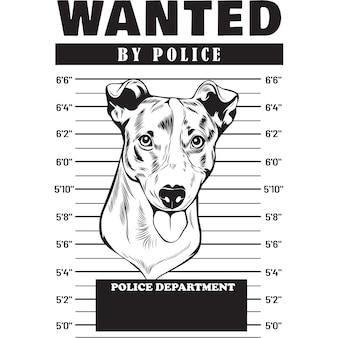 Mugshot of  jack russel terrier dog holding banner behind bars