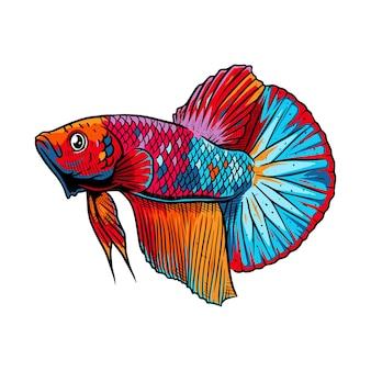 多色ベタの魚