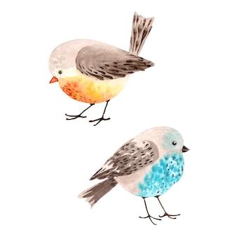 여러 가지 빛깔의 새 벡터 수채화 자유형