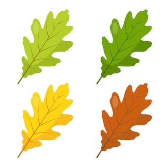 Multicolored oak leaves icons isolated on white background green yellow and brown oak leef