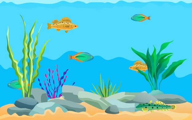 Multicolored sea animals, water plants and stones