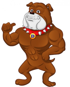 Muscle english bulldog cartoon thumb up
