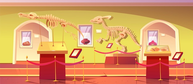 Museum of history with dinosaur skeletons, ancient insects in amber, clay pot and dino fossils. artifacts at historical exhibition. paleontology or archaeology science, cartoon illustration