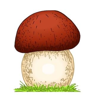버섯 boletus 손으로 그린 벡터 일러스트 스케치 음식 그리기 흰색 배경에 고립