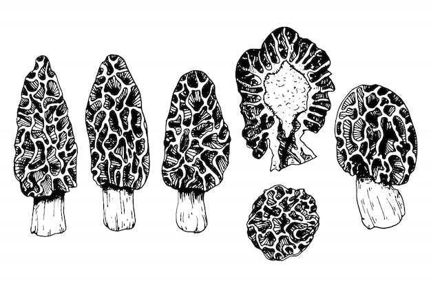 Коллекция грибов с сморчками в стиле гравюры