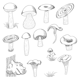 Mushroom hand drawn sketch  illustration. mushroom shiitake, fresh organic food isolated on white.