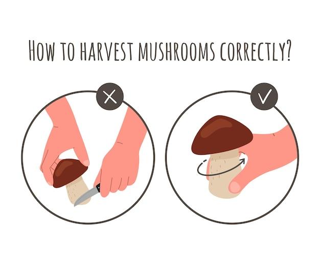 きのこの収穫、摘み取り。きのこを集める、ナイフで根元からきのこを切る方法、または地面からひねる方法。秋の季節に収穫、菌類を摘む。ベクトルフラットイラスト。