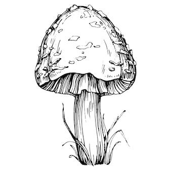 버섯 그림 스케치