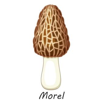 Гриб, изолированные на белом. съедобный гриб сморчок. плоский мультяшный стиль