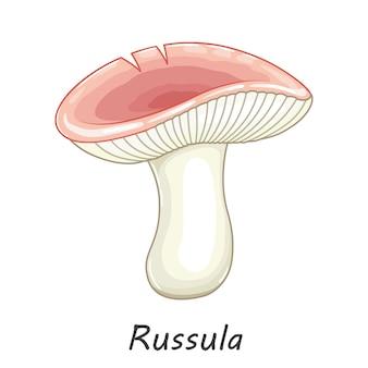 Mushroom isolated on white. edible mushroom russula. flat cartoon style